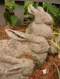 Muttis_bunnies