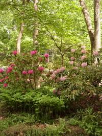 Muttis_garden_3