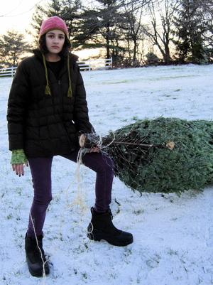 Tree_misery