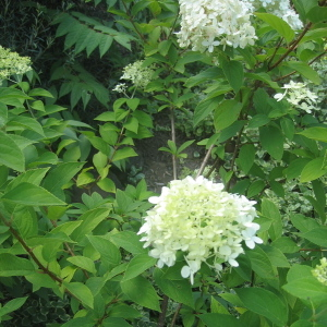 White_garden_flowers